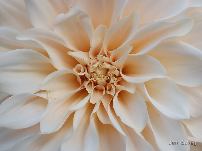 Cream Dahlia by Jen Govey Redbubble