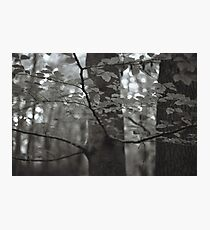 Burnham Beeches Photographic Print