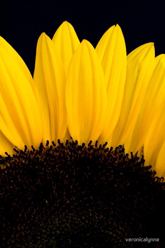 Sunflower by veronicalynne