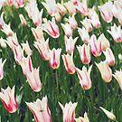 Tulips by Karin Elizabeth