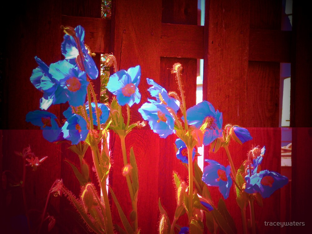 blue flowers by a red fence by traceywaters