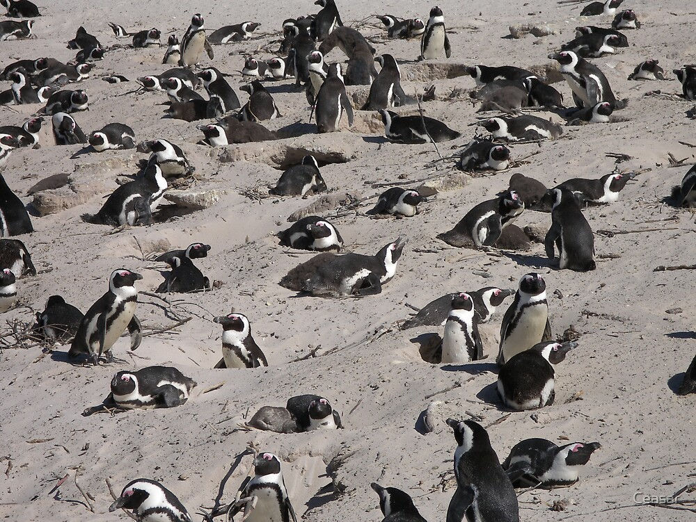 BEACH PENGUINS by Ceasar