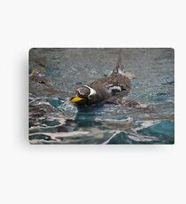 Goin' for a Swim! Canvas Print