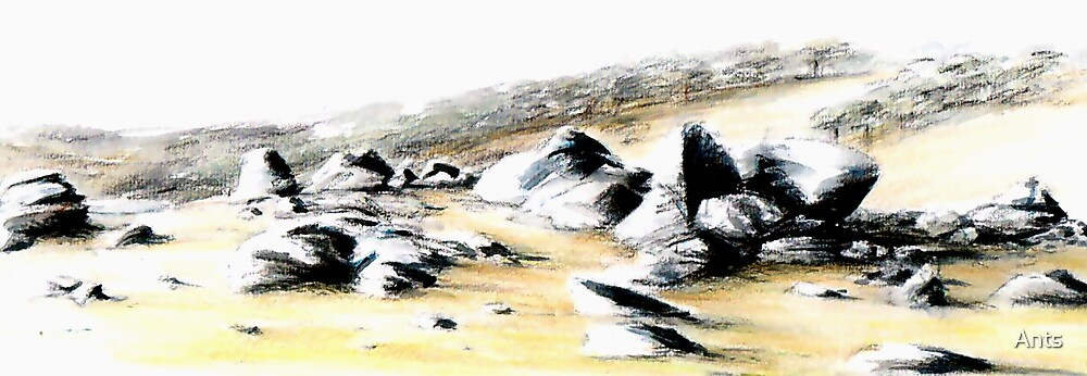 Rocks by Ants