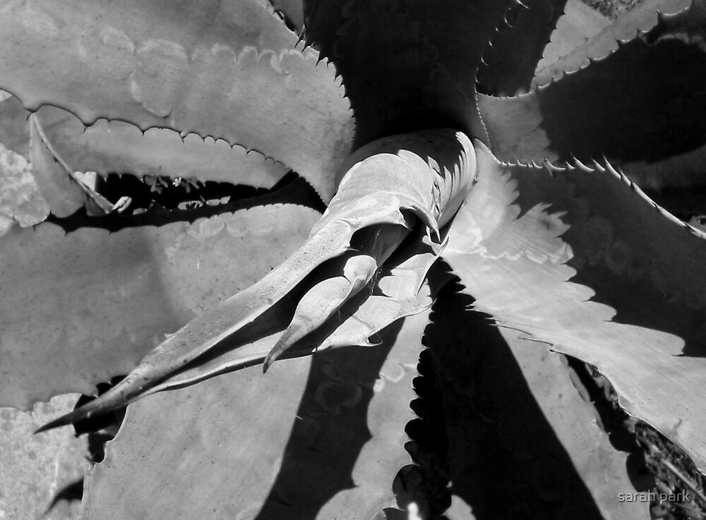 agave art by sarahcro123