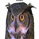 owl by woody42tn