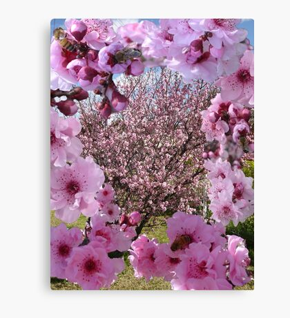 Blossom Beauty Canvas Print
