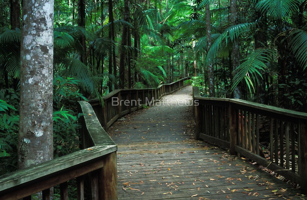Into the forest by Brent Matthews