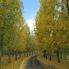 The Yellow Leaf Road by Jared Revell