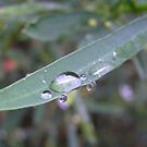 water drop by Stacey Kellett