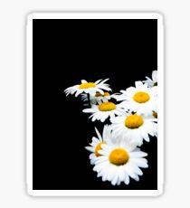 Daisies dof Sticker