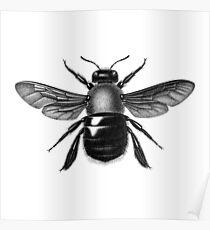 Bumble Bug Poster