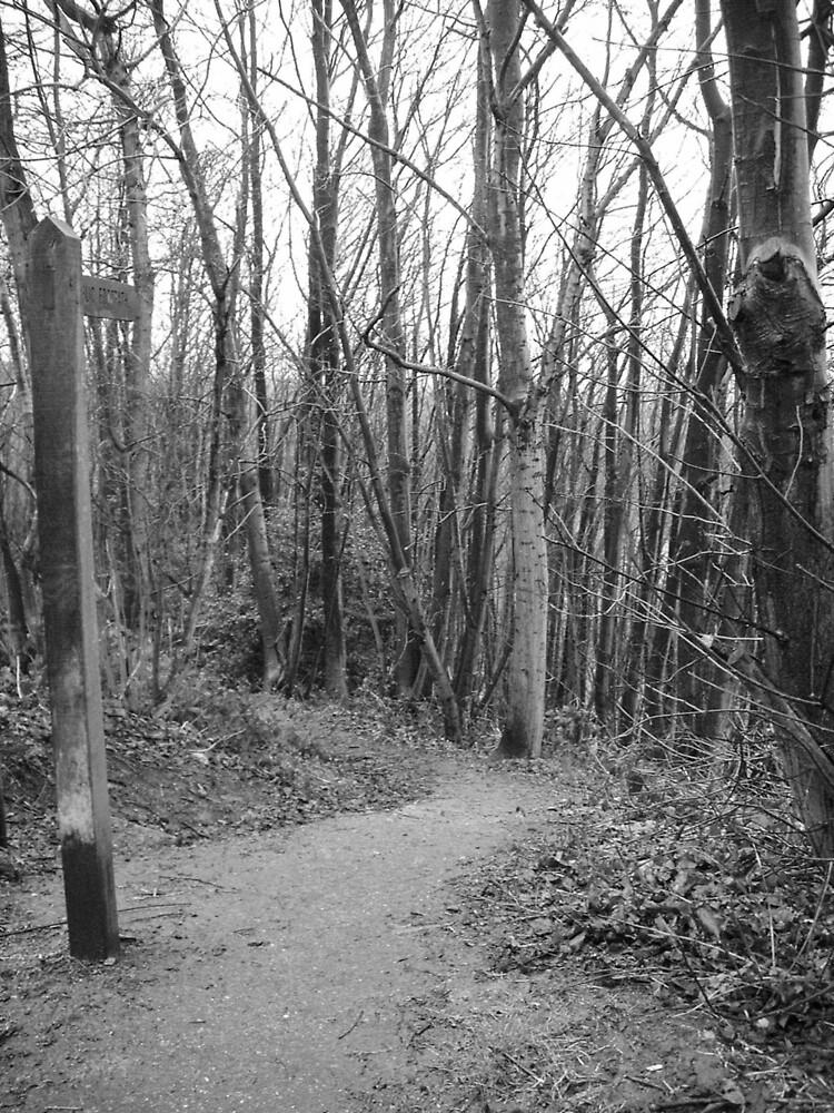 Woodland Walk by Nx75