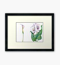 Beautiful flowers of calla Framed Print