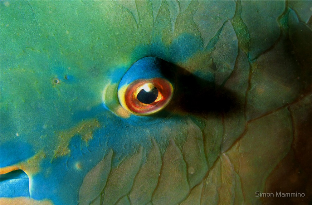 Eye of the Parrot by Simon Mammino