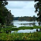 Louisiana Bayou by Judy Seltenright