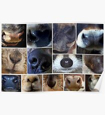 Noses Poster