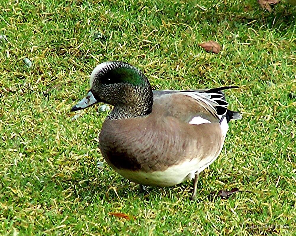 Duck by Larry Kohlruss