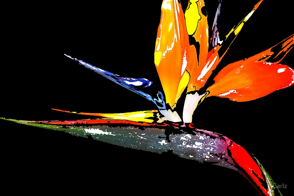 Bird of Paradise Abstract 1 by Carlz