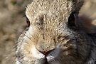 Bunny by Betsy  Seeton