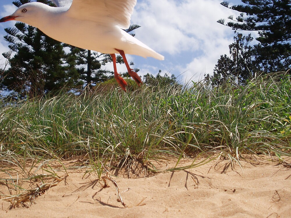 Beach gull by liqwidrok