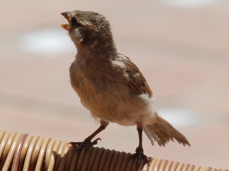 Little Bird! by Maddie