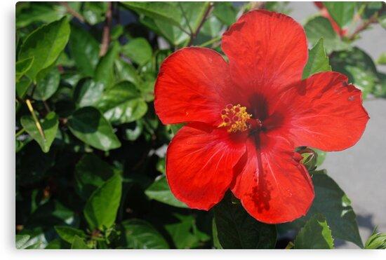 Red Flower! by Maddie
