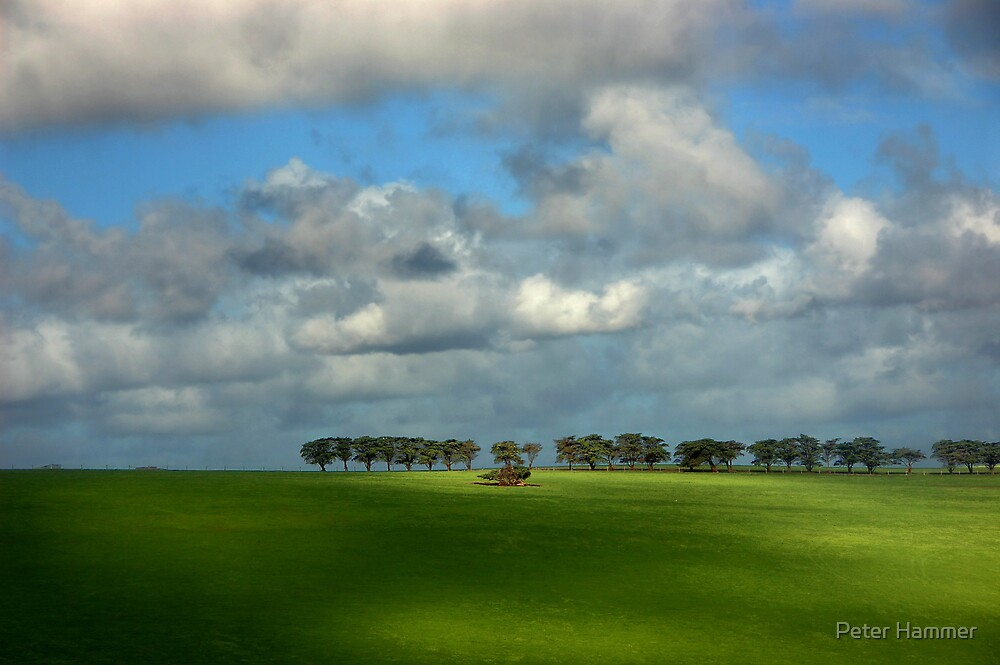 Treeline by Peter Hammer