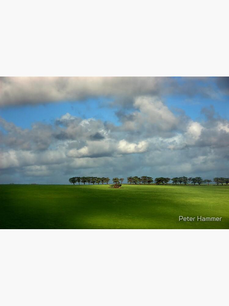 Treeline by PeterH