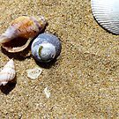 Shells by Apostle
