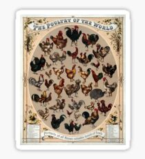 Antique Infographic - The Poultry of the World (1868) Sticker
