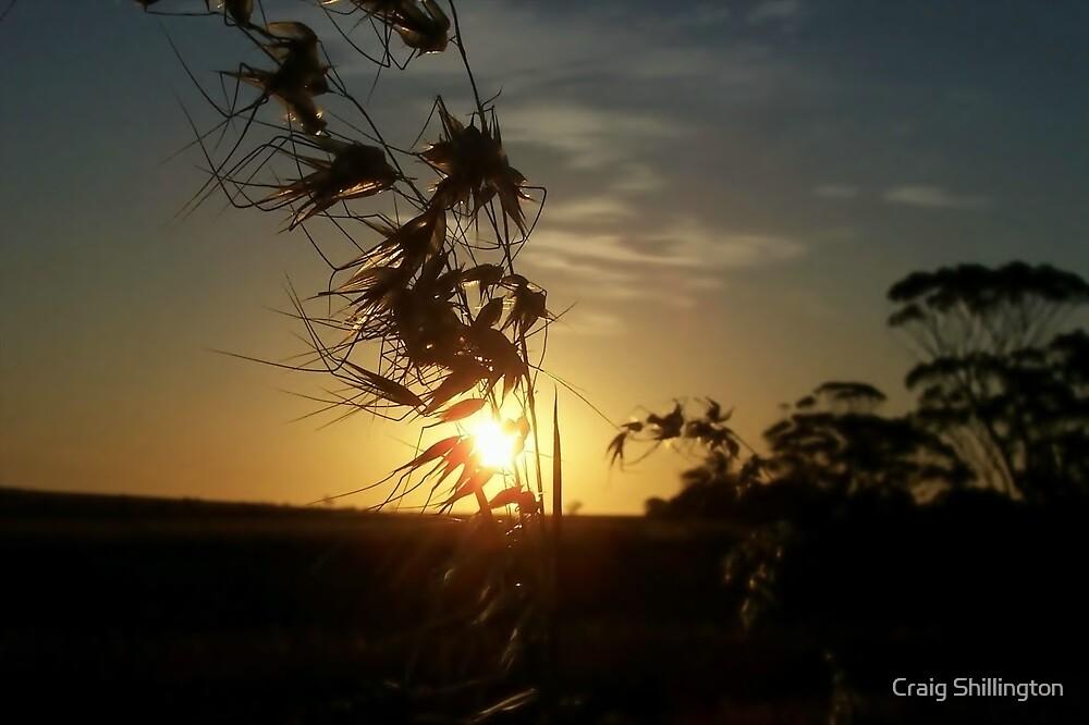 Transcend by Craig Shillington