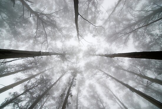 Look Up by John Barratt