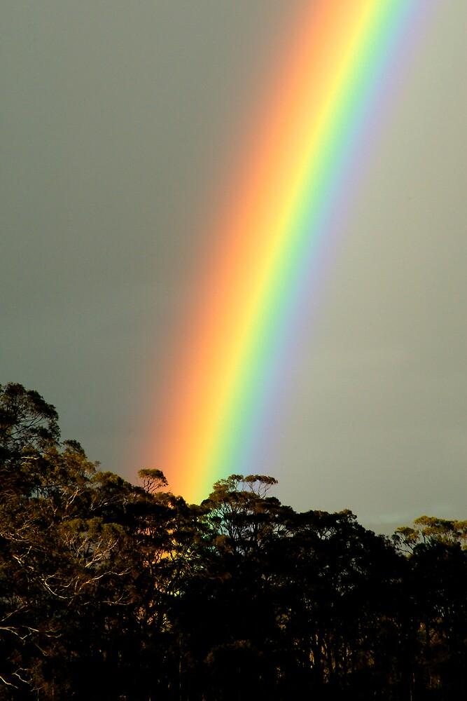Rainbow by John Barratt