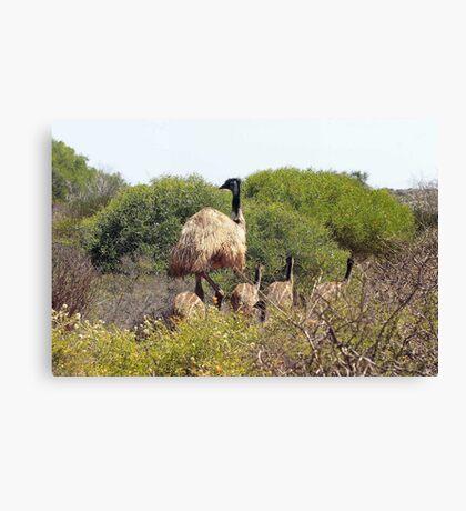 Emus In The Bush Canvas Print