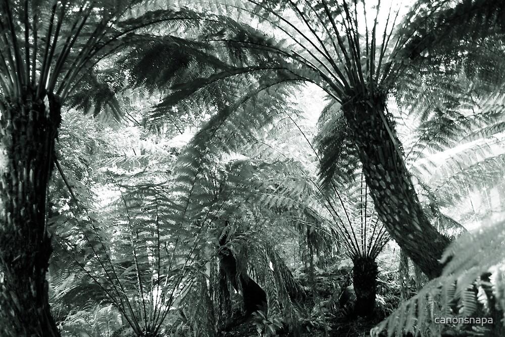 tree ferns by canonsnapa