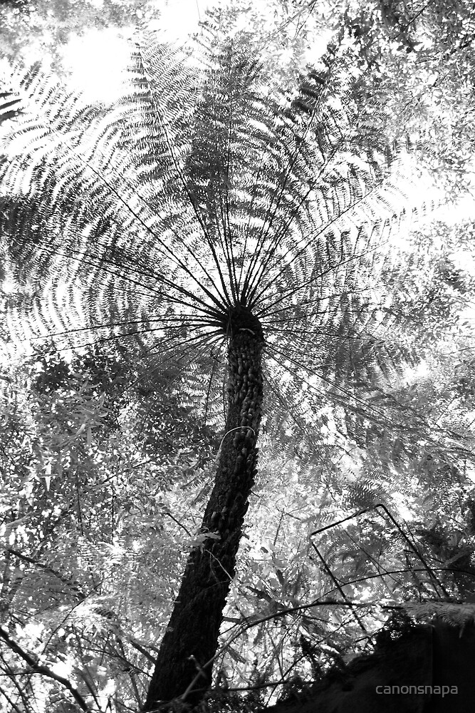 tree fern and light by canonsnapa