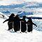 Travel & Adevnture in Antarctica