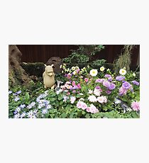 Winnie the Pooh and Piglet Photographic Print