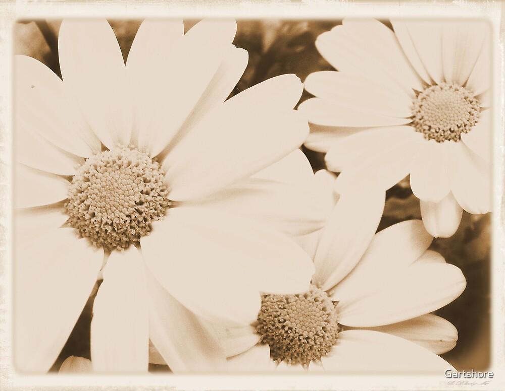 flowers by Gartshore