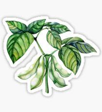 Set of watercolor soy plants Sticker