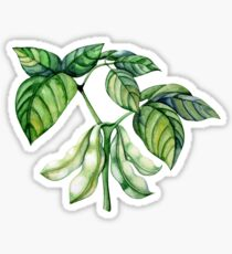 Set of watercolor soy plants Sticker