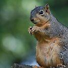 Squirrel  by John Leeman