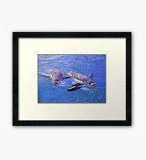 Swimming In Cerulean Blue Framed Print