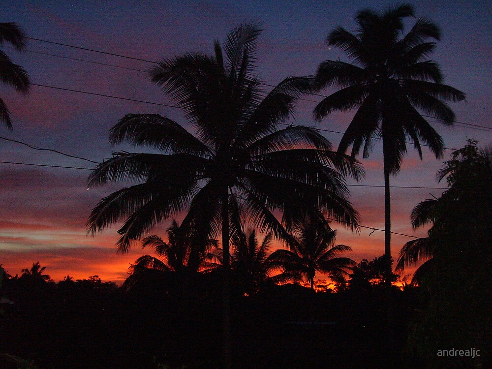 Sunset Palms by andrealjc