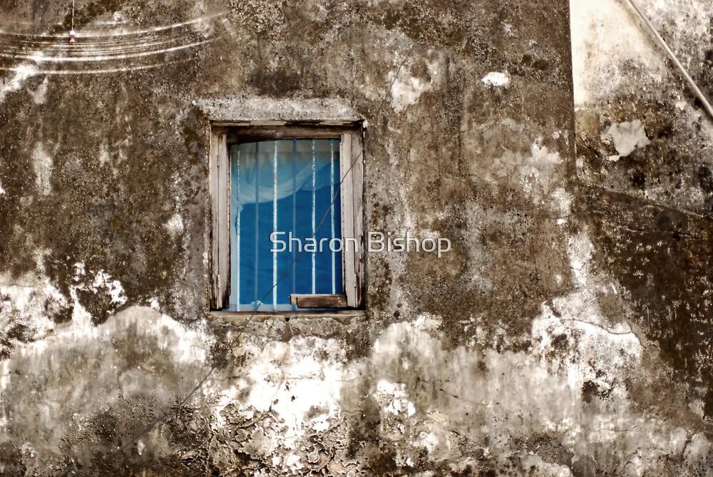 Blue window by Sharon Bishop