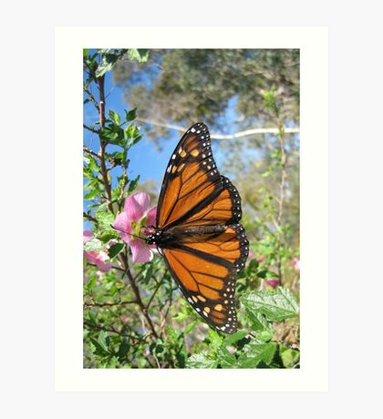 Butterfly Fluttered-by Art Print