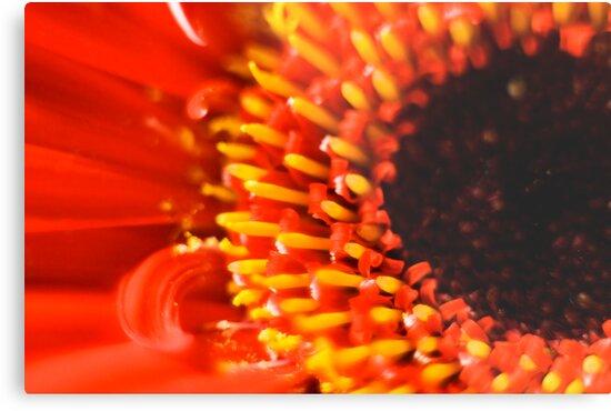 flower in red by Matthew Sime