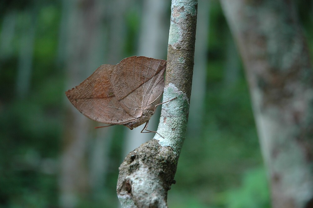 leaf like by kathie
