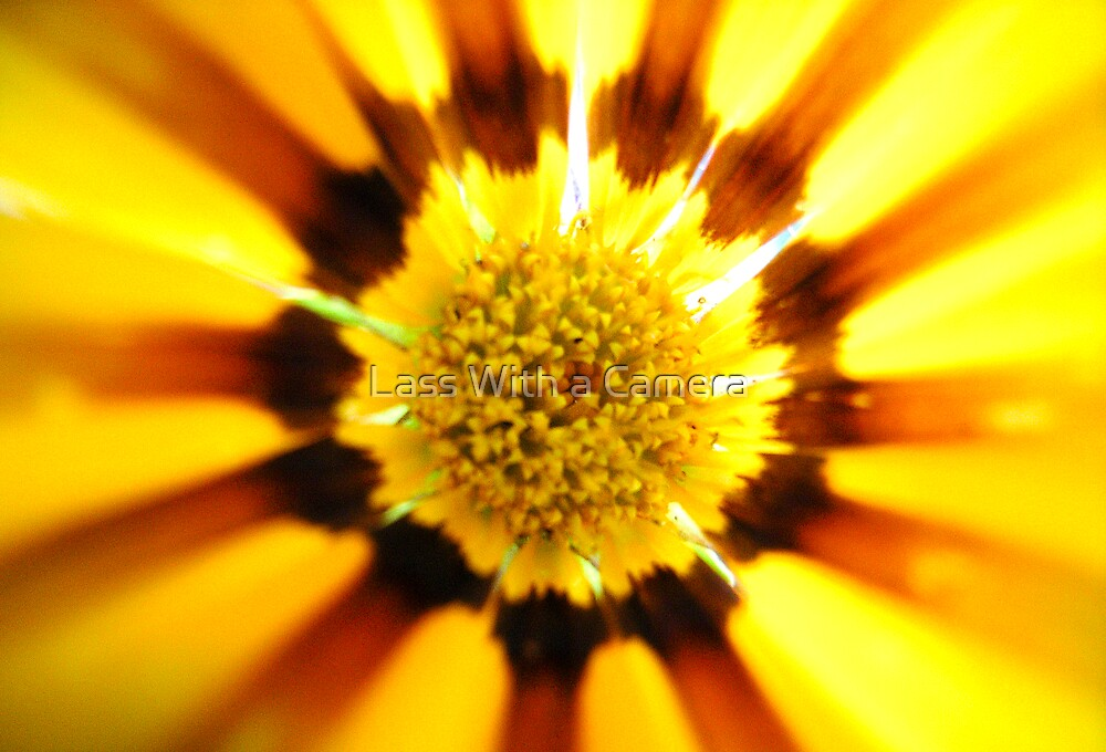 Sun and Flower Power by Lass With a Camera